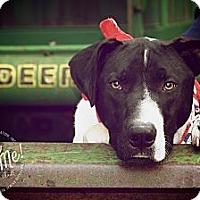 Adopt A Pet :: DUDE - Albany, NY