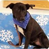 Adopt A Pet :: Tye - Chicago, IL