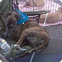 Adopt A Pet :: Coffee - Orange County, CA