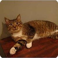 Adopt A Pet :: Trudy - Muncie, IN
