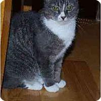 Adopt A Pet :: Gerta - Port Republic, MD