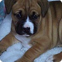 Adopt A Pet :: Chyna - La Habra Heights, CA