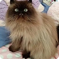 Adopt A Pet :: Teddy - Davis, CA