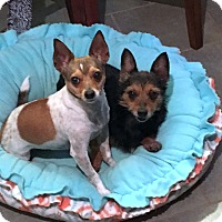 Adopt A Pet :: Bree and Brady - Knoxville, TN