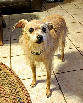 Terrier (Unknown Type, Medium) Mix Dog for adoption in Tucson, Arizona - Sissy / Courtesy Posting