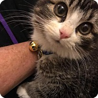 Adopt A Pet :: Solomon - Scottsdale, AZ