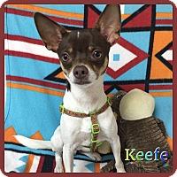 Adopt A Pet :: Keefe - Hollywood, FL