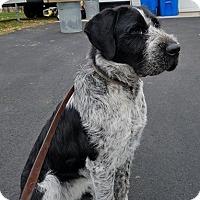 Adopt A Pet :: Kiesa - Princeton, MN