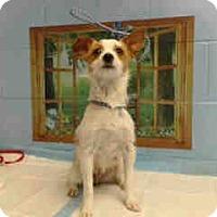 Adopt A Pet :: URGENT on 3/21 SAN BERNARDINO - San Bernardino, CA