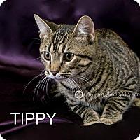Adopt A Pet :: Tippy - Davison, MI