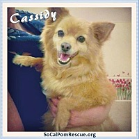 Adopt A Pet :: Cassidy - Irvine, CA