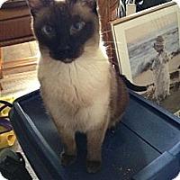 Adopt A Pet :: Iggy&Ziggy - Clay, NY