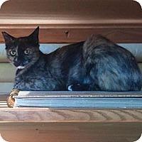 Adopt A Pet :: Helena - Modesto, CA