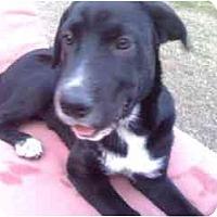 Adopt A Pet :: Mary - Scottsdale, AZ
