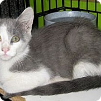 Adopt A Pet :: Melon - Dallas, TX