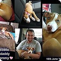 Adopt A Pet :: Annabelle - Geismar, LA
