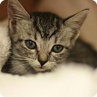 Adopt A Pet :: Tammie - Canoga Park, CA