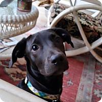 Adopt A Pet :: Miranda - Cumming, GA