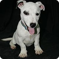 Adopt A Pet :: Snoopy - Lufkin, TX