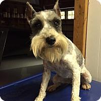 Adopt A Pet :: Maree - St. Petersburg, FL