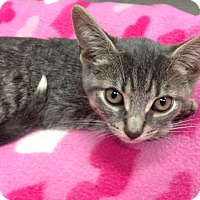 Adopt A Pet :: JJ - Oyster Bay, NY