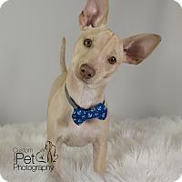 Adopt A Pet :: Duke - San Diego, CA