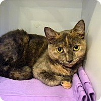 Adopt A Pet :: Wendy - Broadway, NJ