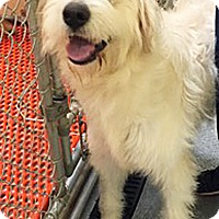 Adopt A Pet :: Kiki - BIRMINGHAM, AL