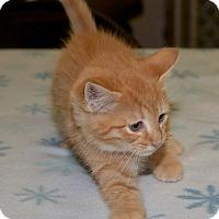 Adopt A Pet :: Toad - Medina, OH