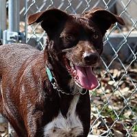 Adopt A Pet :: SOX - Vidor, TX