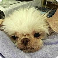 Adopt A Pet :: Marleigh - Centerville, GA