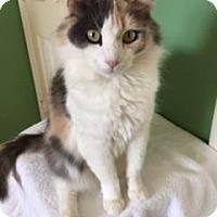 Adopt A Pet :: KEELEY - Washington, NC