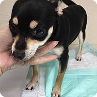 Adopt A Pet :: Nala - Fort Wayne, IN