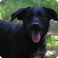 Adopt A Pet :: Flint ($200 adoption fee) - Staunton, VA