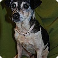 Adopt A Pet :: Sparky in Houston - Houston, TX