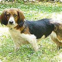Adopt A Pet :: AnnaLee - Mocksville, NC