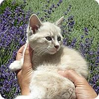 Adopt A Pet :: Francesca - Stanford, CA