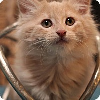 Adopt A Pet :: Joey - Plymouth, MN