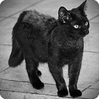 Adopt A Pet :: Greta - San Antonio, TX