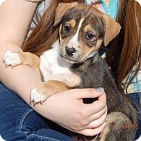 Adopt A Pet :: Crimson (6 lb) - SUSSEX, NJ