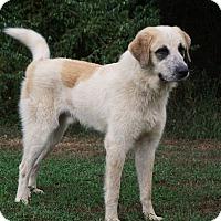 Adopt A Pet :: Rocky - Charleston, AR