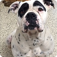 Adopt A Pet :: Alaska - St. Louis, MO