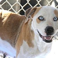 Adopt A Pet :: Jasmine - Marietta, OH
