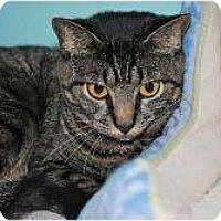Adopt A Pet :: Rhinna - Marietta, GA
