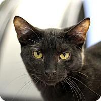 Adopt A Pet :: Twist o' Lemon - Chicago, IL