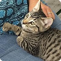 Adopt A Pet :: RootBeer - North Highlands, CA