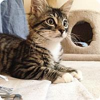 Adopt A Pet :: Raisin - Monroe, GA