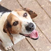 Adopt A Pet :: Billy - Freeport, ME