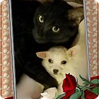 Adopt A Pet :: Greta - Lodi, CA
