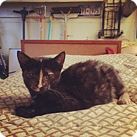 Adopt A Pet :: Buttercup - New York, NY